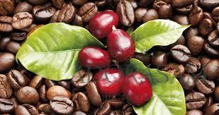 Tản mạn về NGHIỆN cà phê !